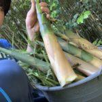 大名竹がタケノコの中でが一番美味しって思うけど。みんなどう?