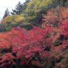 今年の霧島神宮周辺の紅葉はいつなのか?そば屋が毎年勝手にやってる紅葉大胆予想
