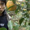 がまこう庵特製柚子胡椒今年も無事に仕込みました。