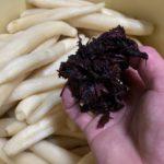 梅干しの残り物で作った大根の漬物が美味しくできすぎた!残り物は捨てないで有効活用すれば良いのです