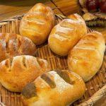 天然酵母で作る山栗パン今年も人気で良かったです。山栗を拾った自分も愛着のあるパンです